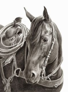 Resultado de imagen de dibujos de caballos