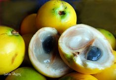 Abiú comes from the Tupi-Guarani and means fruit tip. Typical fruit from the Amazon region, Brazil. And so delicious...
