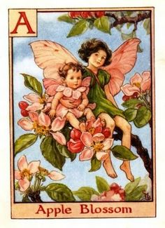 Apple Blossom Flower Fairy Vintage Print by Cicely Mary Barker. first published in London by Blackie, 1934 in A Flower Fairy Alphabet.