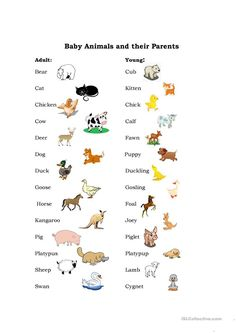 Baby Animals worksheet - Free ESL printable worksheets made by teachers