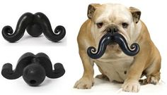 If I had a dog, I would totally give him (or her) a stache.