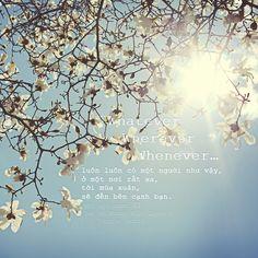 """kitesquotes:  """" """"Thế mới nói, luôn luôn có một người như vậy, ở một nơi rất xa, tới mùa xuân, sẽ đến bên cạnh bạn.  Whatever, Wherever, Whenever…""""  {Một sọt người 囧 - Bất An Kháng Biện Quyền A - Yingie (edit)}  des by HinaNg@Tu Es Mon Lilas  """""""