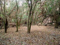 El Dorado Park Nature Center