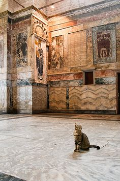 Tourist cat in Chora Church, Istanbul.