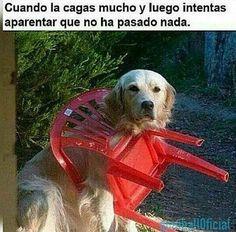 Aquí ... disimulando ... #memes #chistes #chistesmalos #imagenesgraciosas #humor http://www.megamemeces.com/memeces/imagenes-de-humor-vs-videos-divertidos