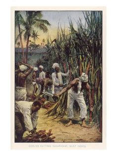 Giclee Print: Workers in the West Indies Cut Sugar Cane : 24x18in