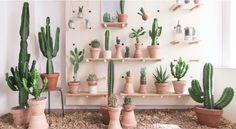 Chacun son cactus !