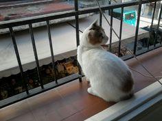 Lili en la ventana