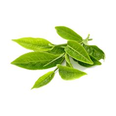 Green tea health benefits - Ordinary tea comes from the leaves of the camellia sinensis plant. Green tea is steamed to prevent oxidation Anti Cholesterol, Make Dog Food, Natural Fat Burners, Green Tea Benefits, Acide Aminé, In Natura, Natural Stress Relief, Recipes, Herbs