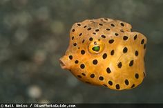 Lembeh Strait, Indonesia. yes please