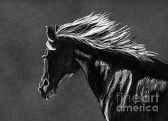 Black and white horse charcoal drawing by Tracey Everington of Tracey Lee Art Designs White Charcoal, Black And White, Ride Drawing, Charcoal Drawing, Art Designs, Fine Art America, Shops, Community, Horses
