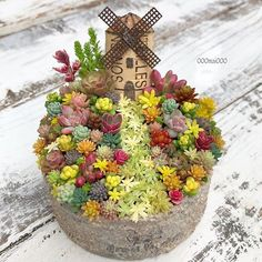 1 million+ Stunning Free Images to Use Anywhere Succulent Gardening, Succulent Terrarium, Planting Succulents, Container Gardening, Planting Flowers, Fairy Garden Plants, Fairy Garden Houses, Pot Jardin, Succulents In Containers