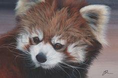 red panda pencil - Google-Suche