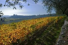 An exquisite cascade of golden light illuminates the beauty of fall color in our beloved Valpolicella. One can see the La Grola and La Poja Vineyards in the background.