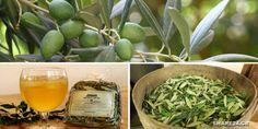 Αυτό το Αφέψημα από Φύλλα Ελιάς θα Σας Δώσει Απίστευτη Ενέργεια & θα Ενισχύσει το Ανοσοποιητικό Σας Καλύτερα από Οτιδήποτε! Green Beans, Health Fitness, Herbs, Vegetables, Plants, Food, Pancake, Essen, Pancakes