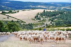 Les éleveurs | Le Fédou - Fromagerie de Hyelzas