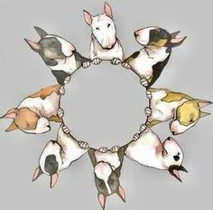 Circle Of Bull Terriers...
