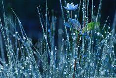 Dew it rain droplets on blades of grass.