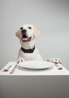 Safe food for DOGS   ( A list of 20 foods, including pumpkin, sweet potato, popcorn, yogurt, peanut butter and apples)