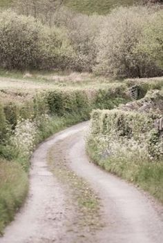 Country lane, Monmouthshire