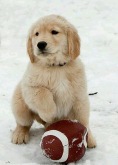 Puppy Football  In The Snow ❄ ❄