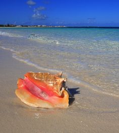 Sea shells by the sandy shore in Turks and Caicos.