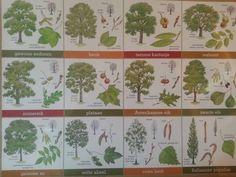 Dag 149/365 Bomen herkennen