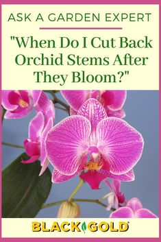 New Pics australian Orchids Thoughts Orchid, a blossom with attractiveness as well as splendor attractiveness, has got in excess of 700 varieties, Orchid Care After Flowering, Orchid Plant Care, Orchid Plants, Orchid Flowers, House Plant Care, House Plants, Pruning Orchids, Indoor Orchids, Orchid Roots