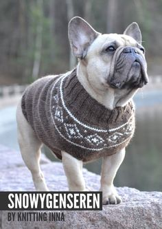 The Snowy Dog Sweater, made to fit a French Bulldogs Chest, Hallelujah!! by Knitting Inna.