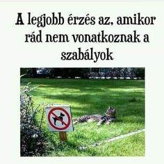 Bad Humor, Bad Memes, Really Funny, Funny Cute, Funny Images, Funny Photos, Animal Memes, Funny Animals, Funny Fails