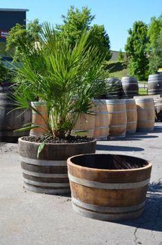 Garden Architecture, Own Home, Beautiful Gardens, Container Gardening, Coffee Shop, Barrel, Planter Pots, Home And Garden, Yard