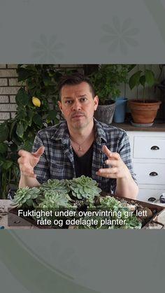 Har dine sukkulenter lett for å råtne? Her viser jeg hvordan jeg planter for å få dem til å trives, og ikke minst hva jeg gjorde som gikk galt😄😄 Echeveria, Planters, Plant, Window Boxes, Pot Holders, Flower Planters, Pots