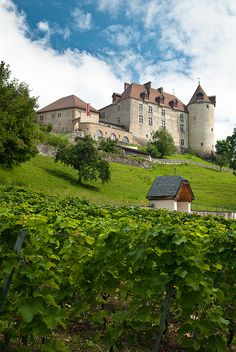 vineyard. with view on the castle of Gruyère, Switzerland.