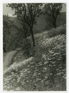 FIORI ED ALBERI.Vecchia Foto d Epoca Old Photo 1930 Vintage Natura Paesaggi F268