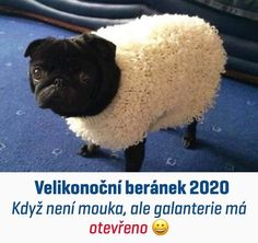 Tak to mě dostalo 😂👍 Funny Pug Pictures, Fursuit, Picture Captions, Shih Tzu, Are You Happy, Dog Breeds, French Bulldog, Hilarious, Make It Yourself