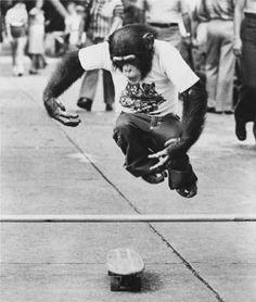 Chimp Skateboarding