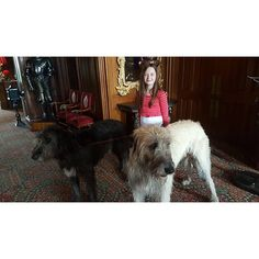 Good morning from Ashford Castle! #IFV2016 #Ireland #wolfhound #dogsofinstagram