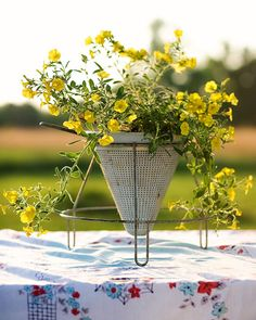 this is such an amazing idea.. use an old colandar to plant and grow your summer flowers.  ღ