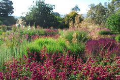 Similar colours can look terrible when closely combined, but nothing jars in this garden. Photo: Michael McCoy