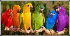 Rainbow Parrots | Is it real... Or is it Photoshopped? ...Hm… | Flickr