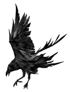 Quoth the Raven – Camden Park Press Crow Art, Raven Art, Body Art Tattoos, Crow Tattoos, Phoenix Tattoos, Ink Tattoos, Dark Art Illustrations, Illustration Art, Crows Drawing