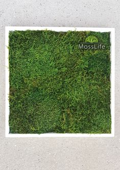 Moss pictures into the interior