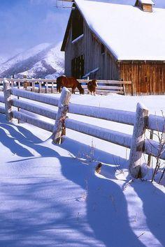 Old barn, split rail fence, & horses on a sunny winter day