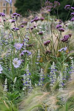 perennials and annuals at Kew Gardens - try asters, Verbena bonariensis, salvia, foxtail barley- scabieuse, sauge. Kew Gardens, Outdoor Gardens, Longwood Gardens, Plant Design, Garden Design, Landscape Design, Beautiful Gardens, Beautiful Flowers, Garden Cottage