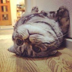 floor cat.