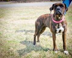 Heidi http://www.pchsva.org/forms/adoptionapplication.html