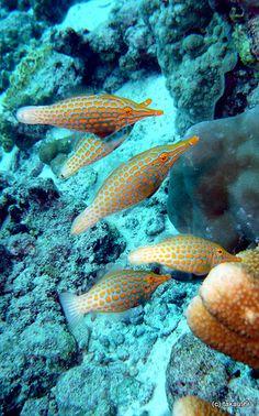 Underwater Creatures, Underwater Life, Underwater Photos, Ocean Creatures, Beautiful Tropical Fish, Beautiful Ocean, Sea Aquarium, Saltwater Fish Tanks, Fishing World