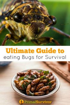 Ultimate Guide to Eating Bugs for Survival. A major disaster occurs and you've got to flee with your family to the wilderness. You've thought ahead and packed a Bug Out Bag. But soon your survival food will run out. What do you plan on eating?Save your energy and don't bother hunting.  The best wilderness survival food is insects.