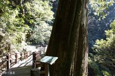 冬繽紛,雲高遠,樹未老@大雪山森林遊樂區 - Yahoo奇摩旅遊