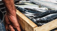 transportando pescado para Boreas